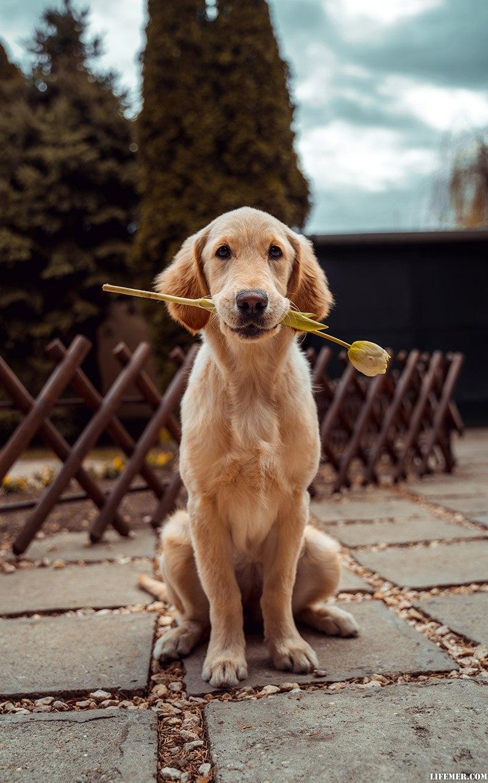 Помогите в приюте для животных